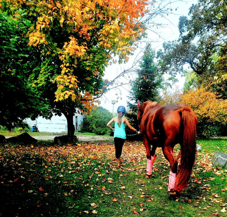 Desafio da foto do leitor: folhagem de outono 5