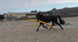 Thursday Video: You Say 'Ground Pole,' I Say…