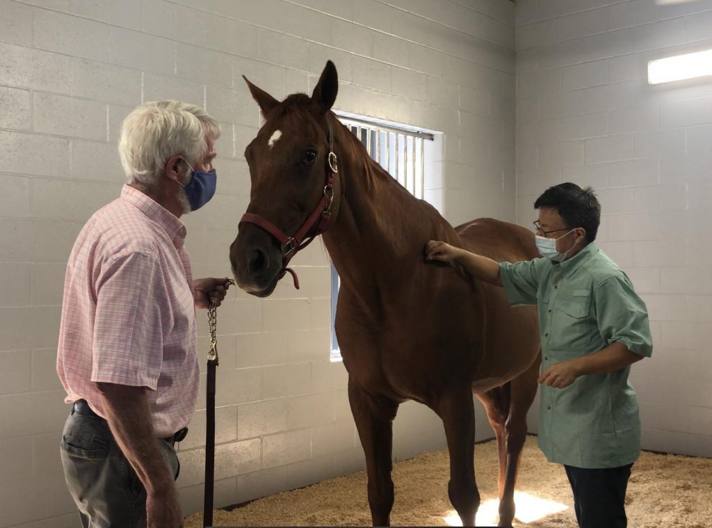 Acupuncture as Part of an Equine Treatment Plan | HORSE NATION