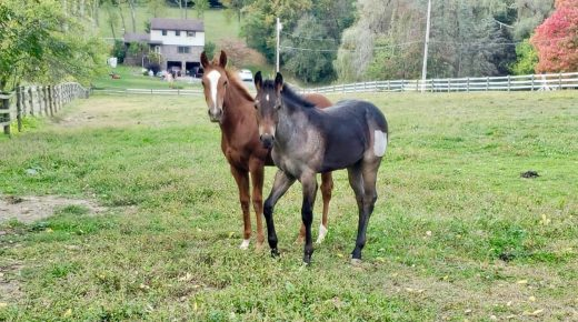 Nutrition for Weanlings
