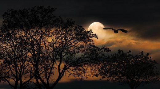 Halloween Short Story: Ears in the Moonlight