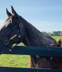 Friday Feels: Zenyatta and Her Candy Ride Filly