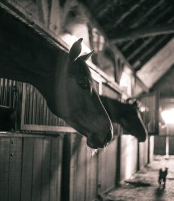 Best of EN: Successful Strategies for Choosing a New Barn for Your Horse