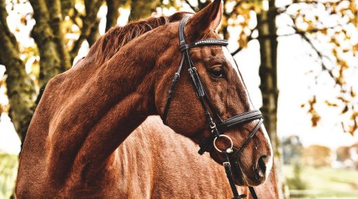 UK Gluck Equine Research Center Launches National Survey on Horses Aged 15 Years and Older