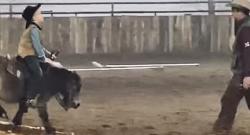 Thursday Video: World's Smallest Ranch Horse