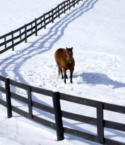 Kentucky Performance Products: When Does My Horse Get Cold?