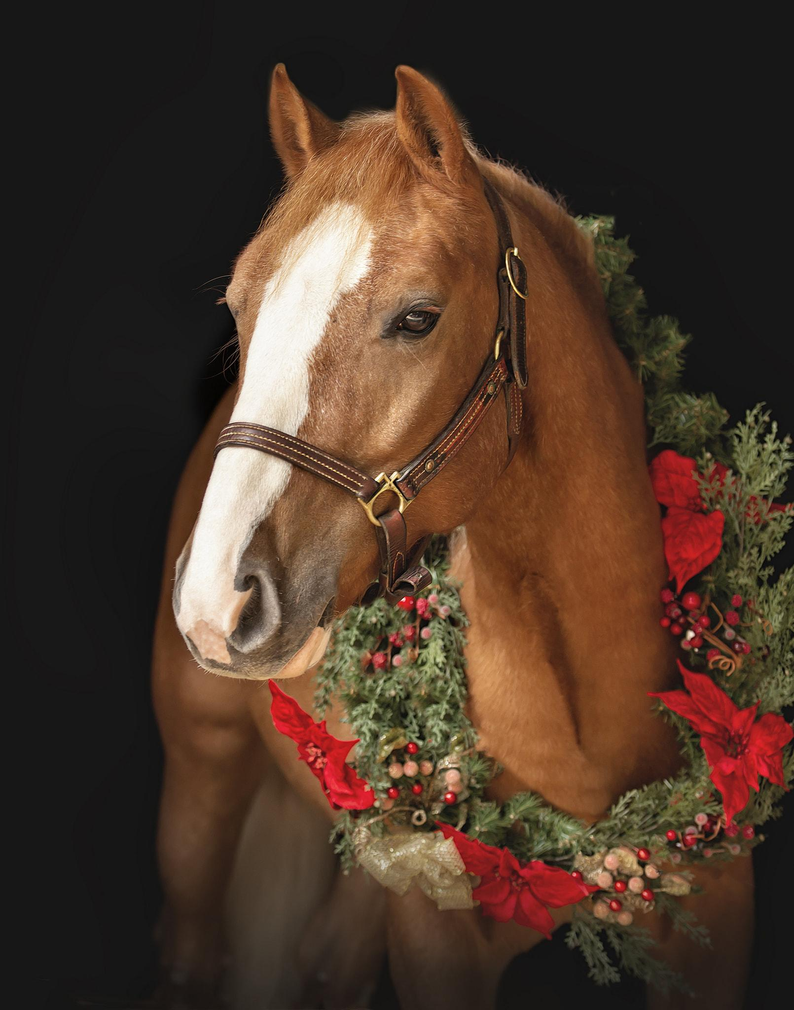 Desafio fotográfico: Boas festas | HORSE NATION 3