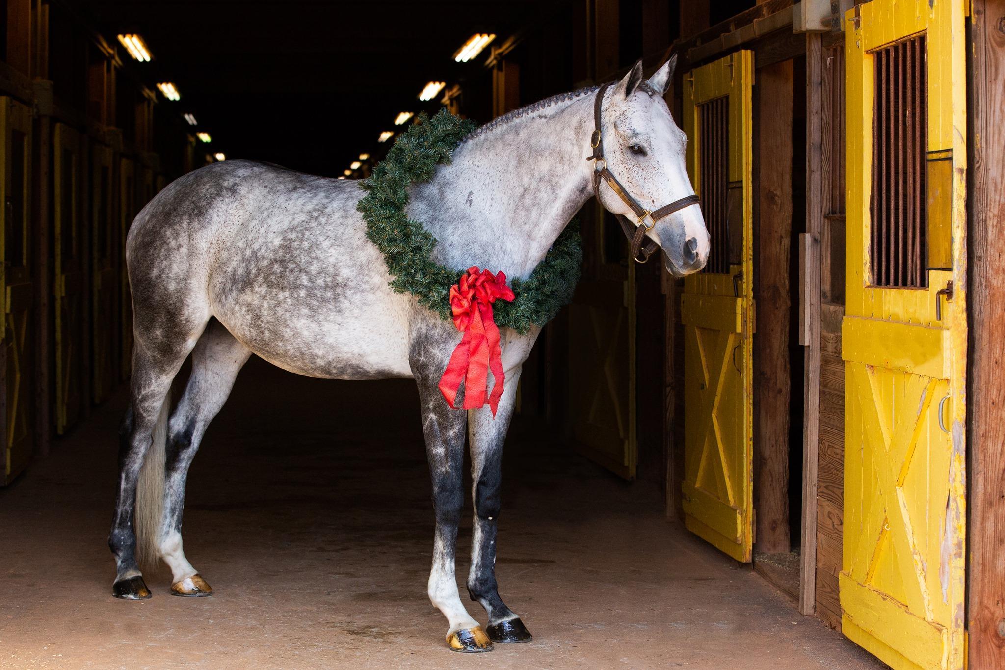 Desafio fotográfico: Boas festas | HORSE NATION 4