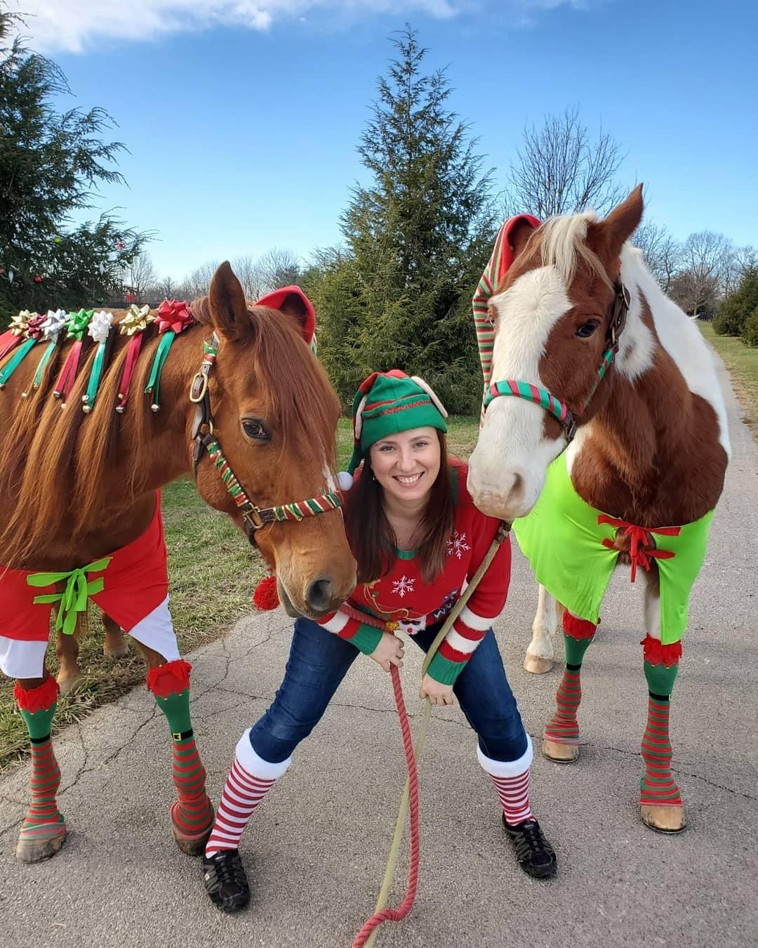 Desafio fotográfico: Boas festas | HORSE NATION 6