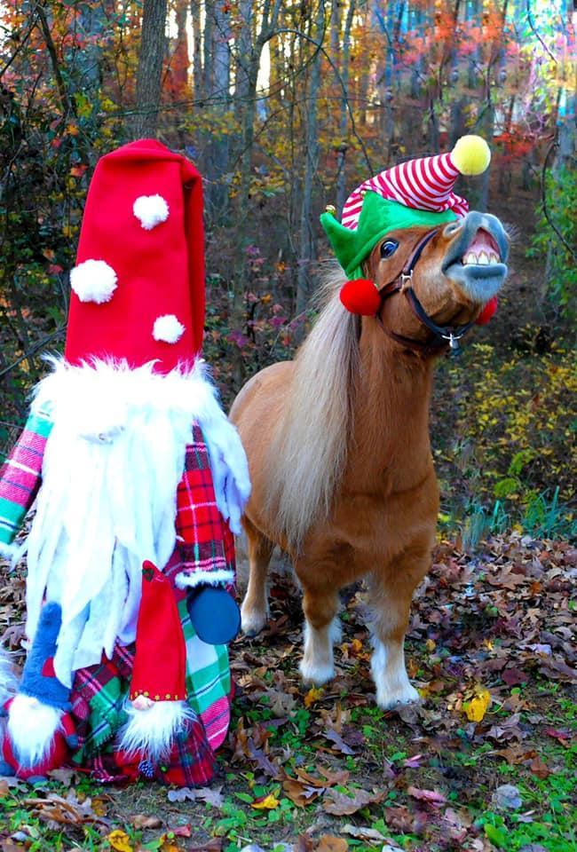 Desafio fotográfico: Boas festas | HORSE NATION 7