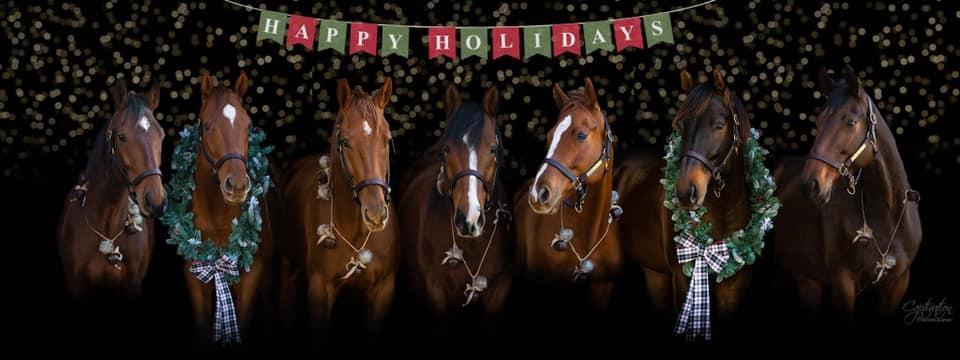 Desafio fotográfico: Boas festas | HORSE NATION 8