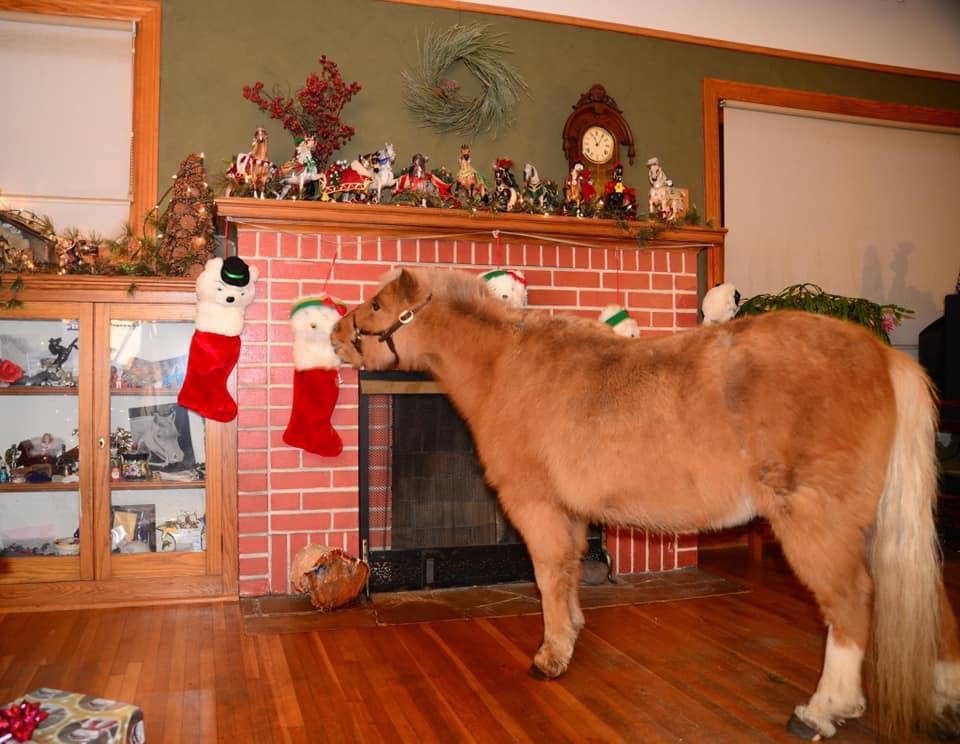 Desafio fotográfico: Boas festas | HORSE NATION 10