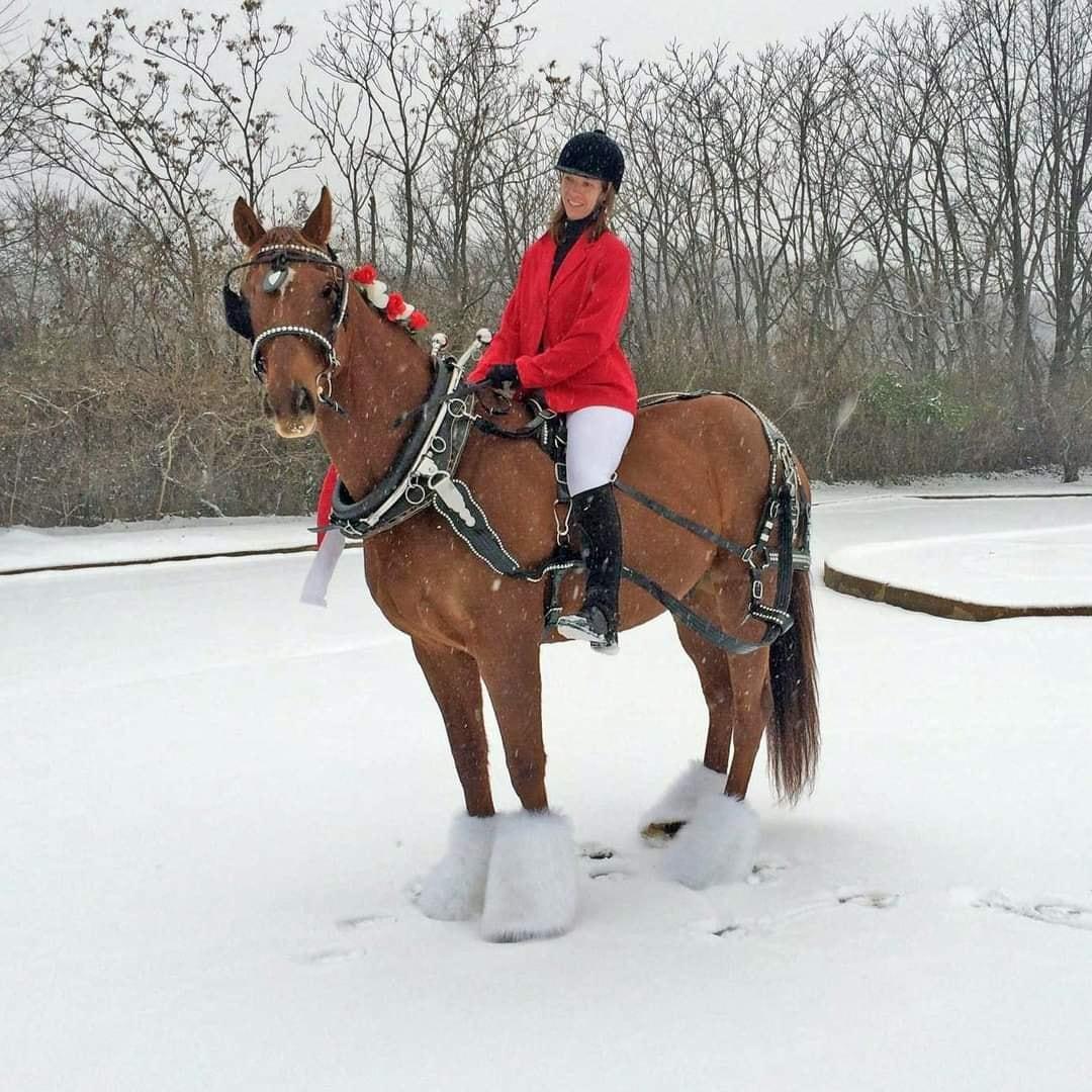 Desafio fotográfico: Boas festas | HORSE NATION 11