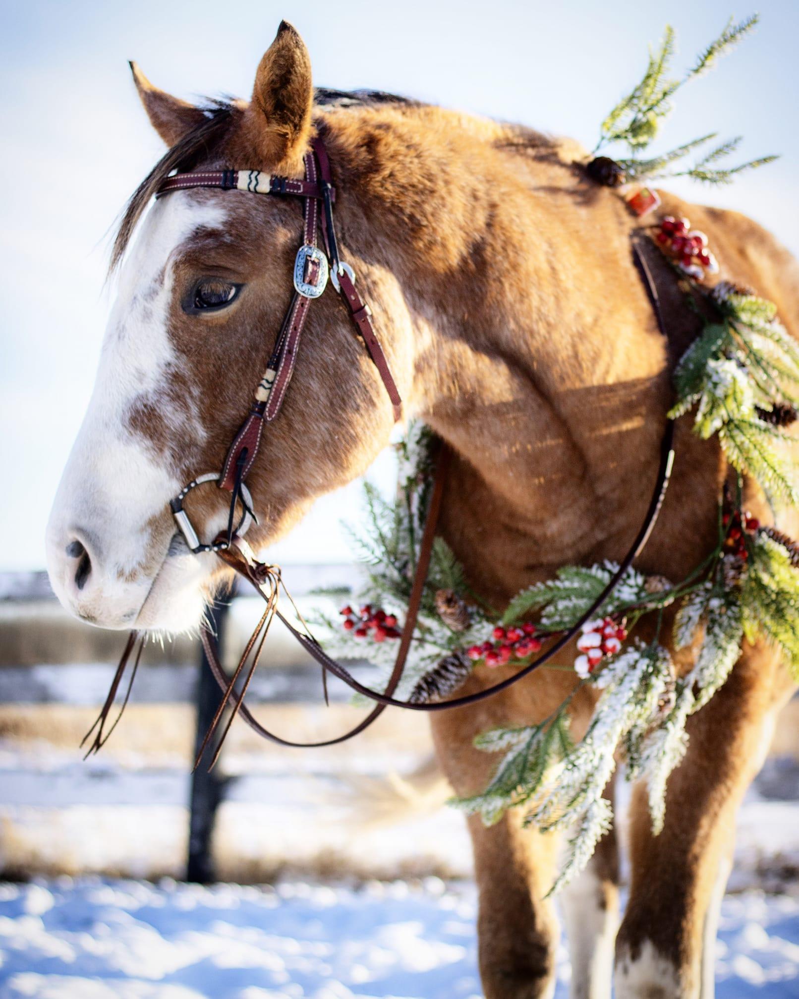 Desafio fotográfico: Boas festas | HORSE NATION 12