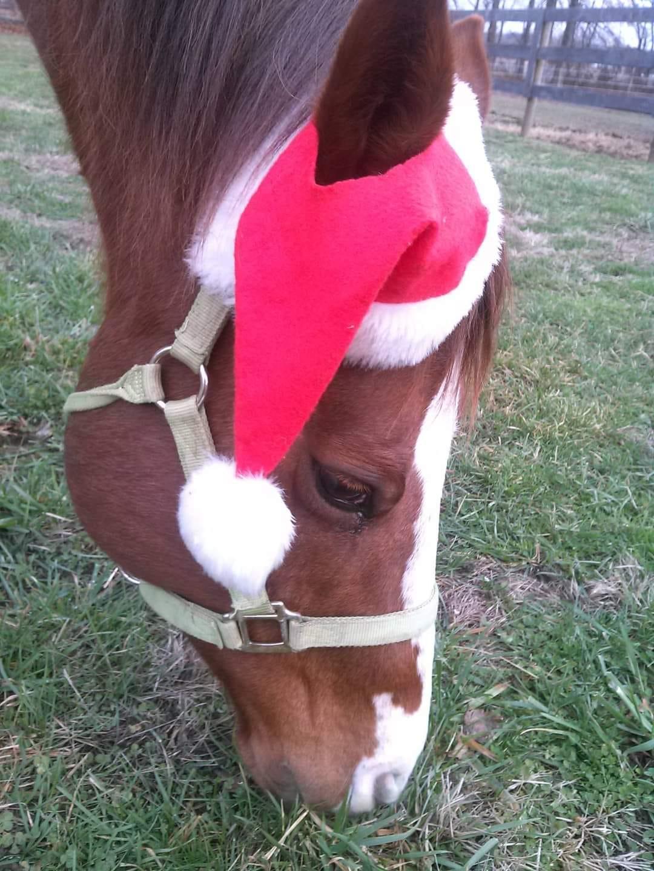 Desafio fotográfico: Boas festas | HORSE NATION 13