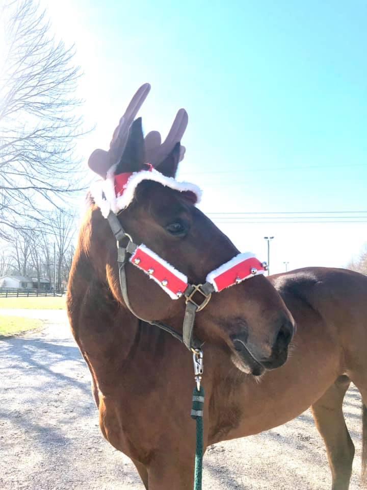 Desafio fotográfico: Boas festas | HORSE NATION 14
