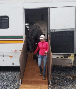 Best of JN: 10 Tips for Long-Distance Horse Shipping