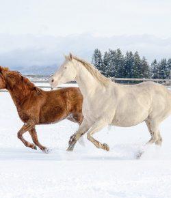 HN Christmas Carols: 'Runnin' 'Round the Farm Property'