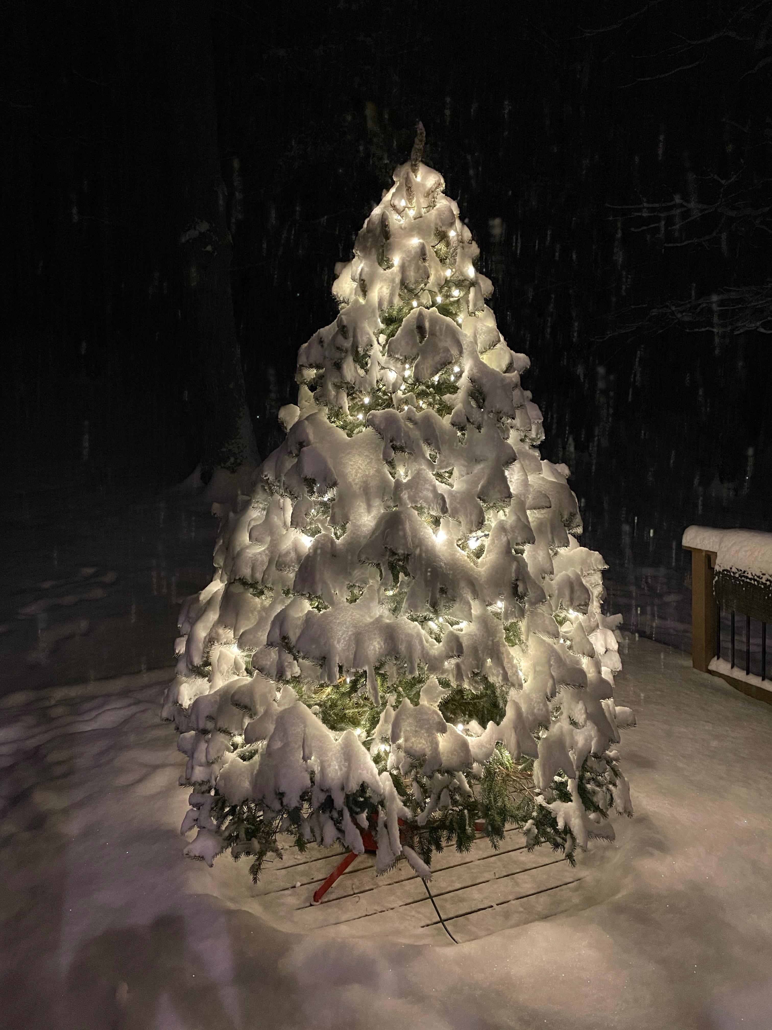 Um conto de duas árvores de Natal: uma metáfora para 2020 7