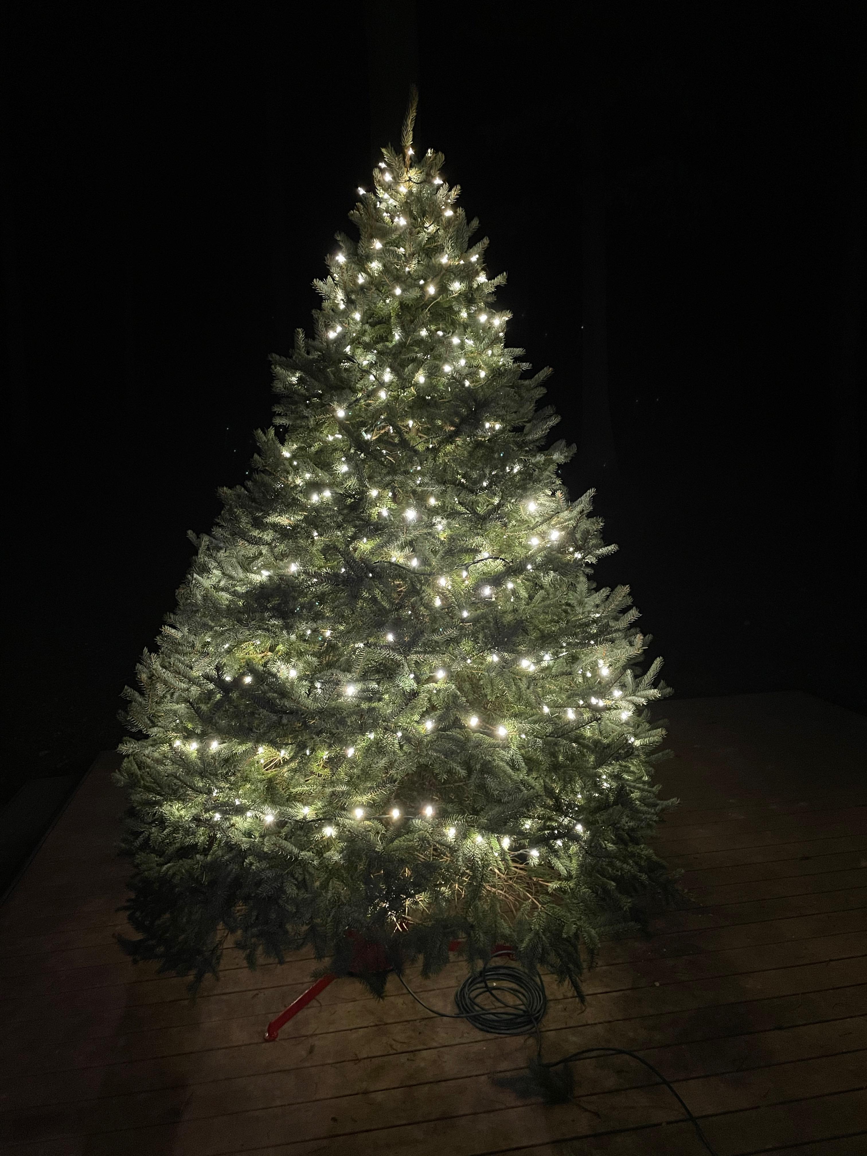 Um conto de duas árvores de Natal: uma metáfora para 2020 5