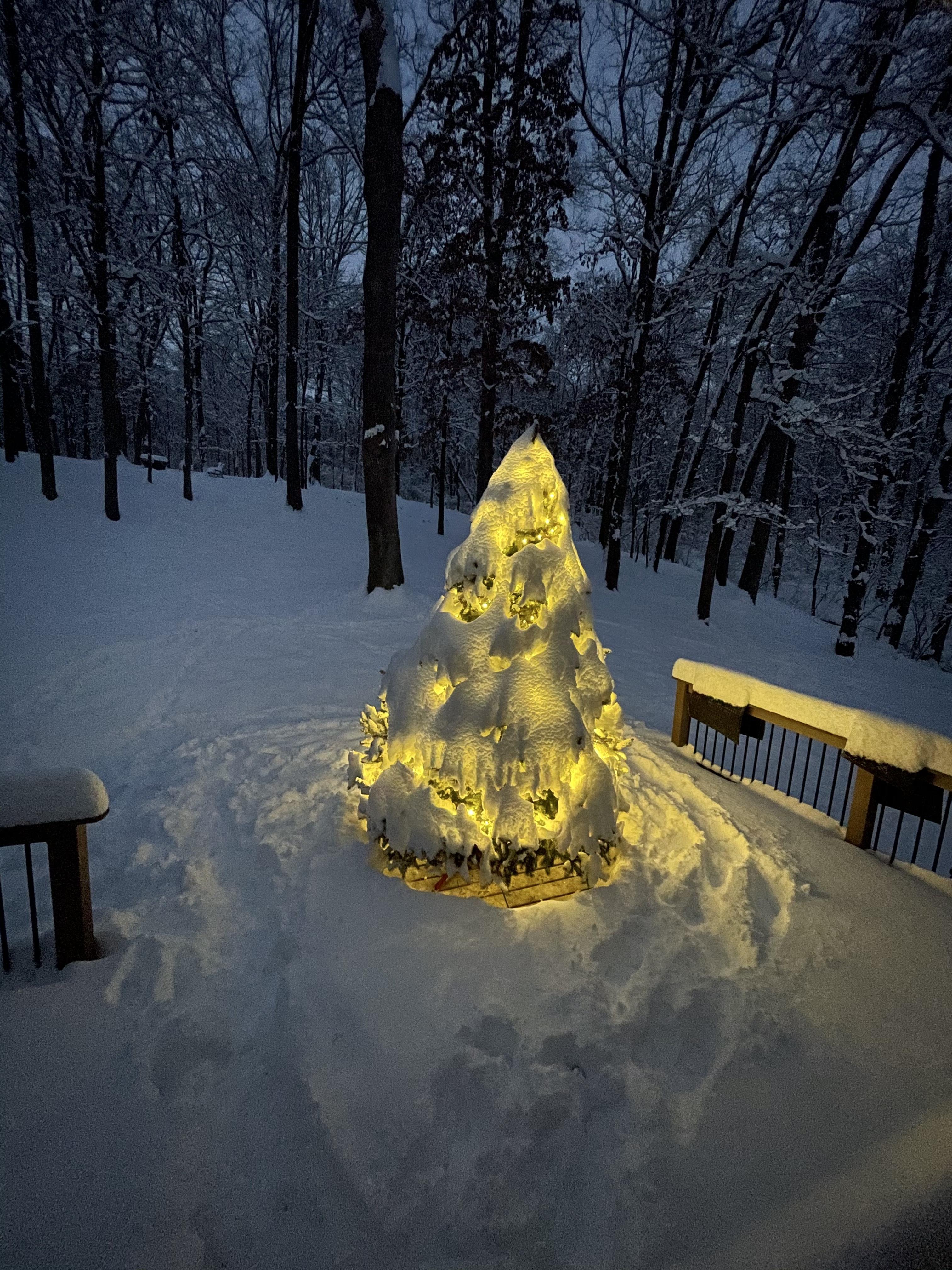 Um conto de duas árvores de Natal: uma metáfora para 2020 8