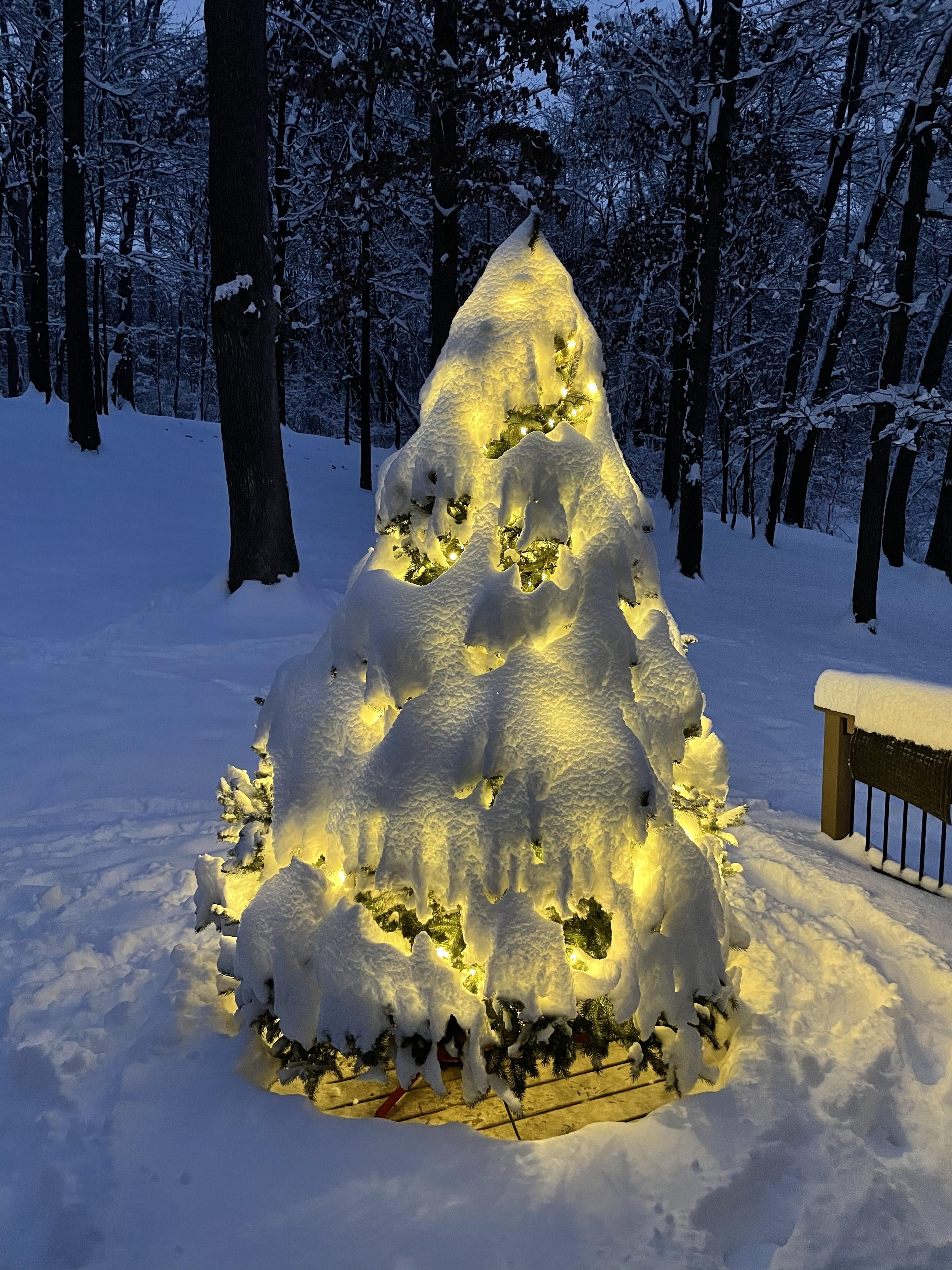 Um conto de duas árvores de Natal: uma metáfora para 2020 9