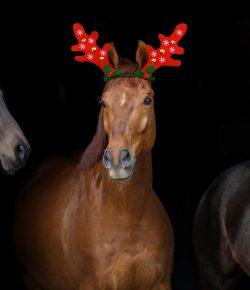 HN Christmas Carols: 'The Horse's Song'