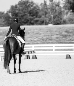 Why Everyone Should Compete at the Thoroughbred Makeover At Least Once