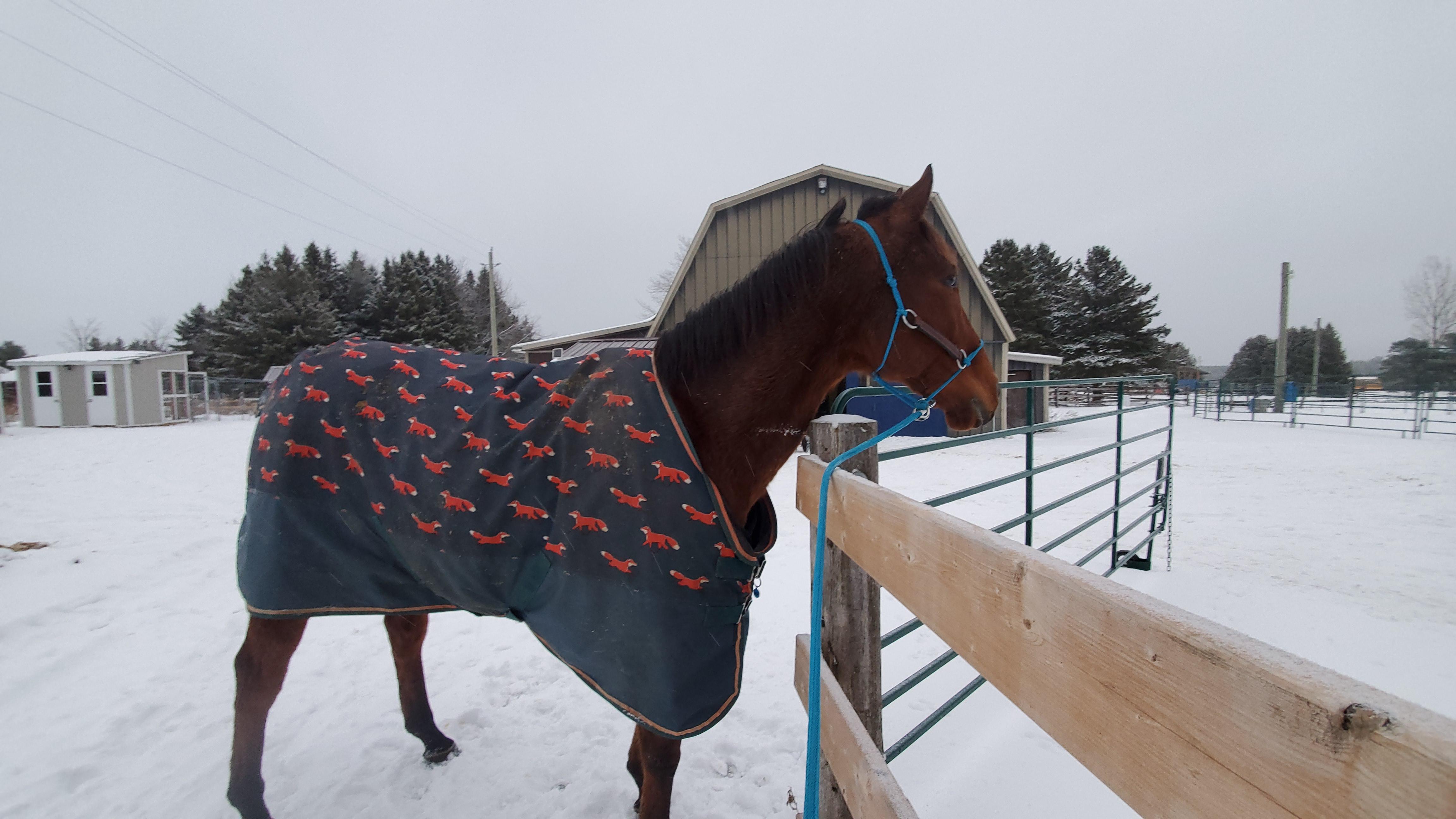 Equitação com Lindsey Partridge: autoconfiança como habilidade de sobrevivência 2