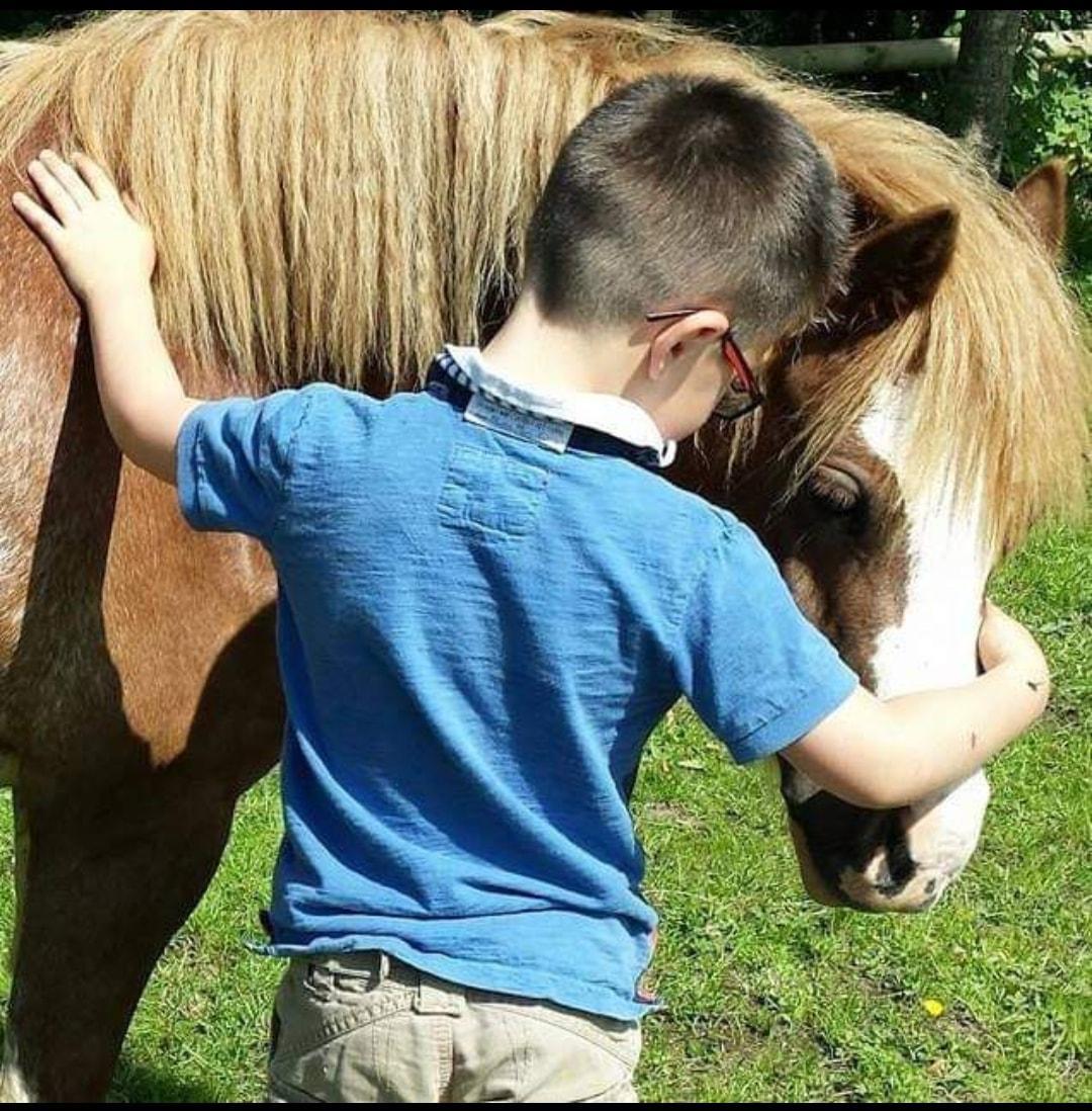 Desafio fotográfico do leitor: Cavalo Snuggles 3