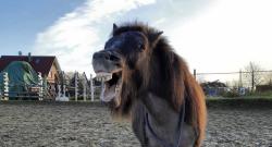Best of JN: Horses That Make Us Laugh