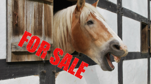 Horse Sale Ads, Translated
