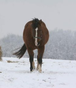 Kentucky Performance Products: Metabolic Horses and Winter