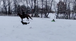 #TGIF: Play in the Snow