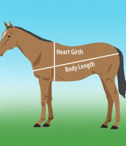 Kentucky Performance Products: How To Weigh Your Horse