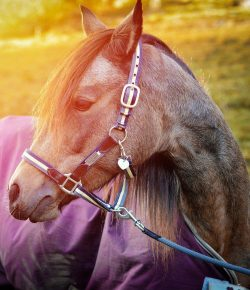 Winterize Your Horse: The Pros and Cons of Blanketing