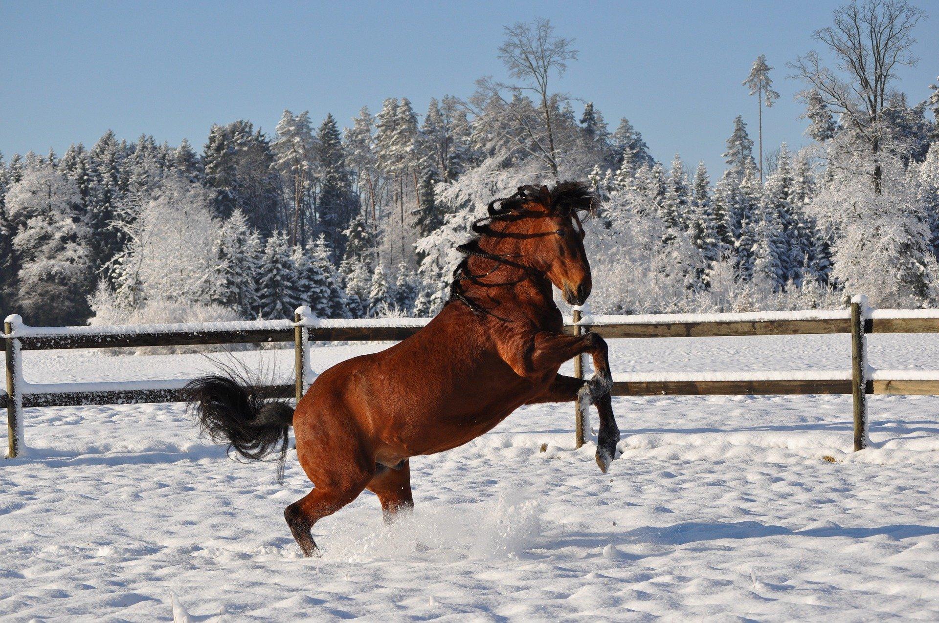 Prepare seu cavalo para o inverno: os prós e contras da cobertura 2