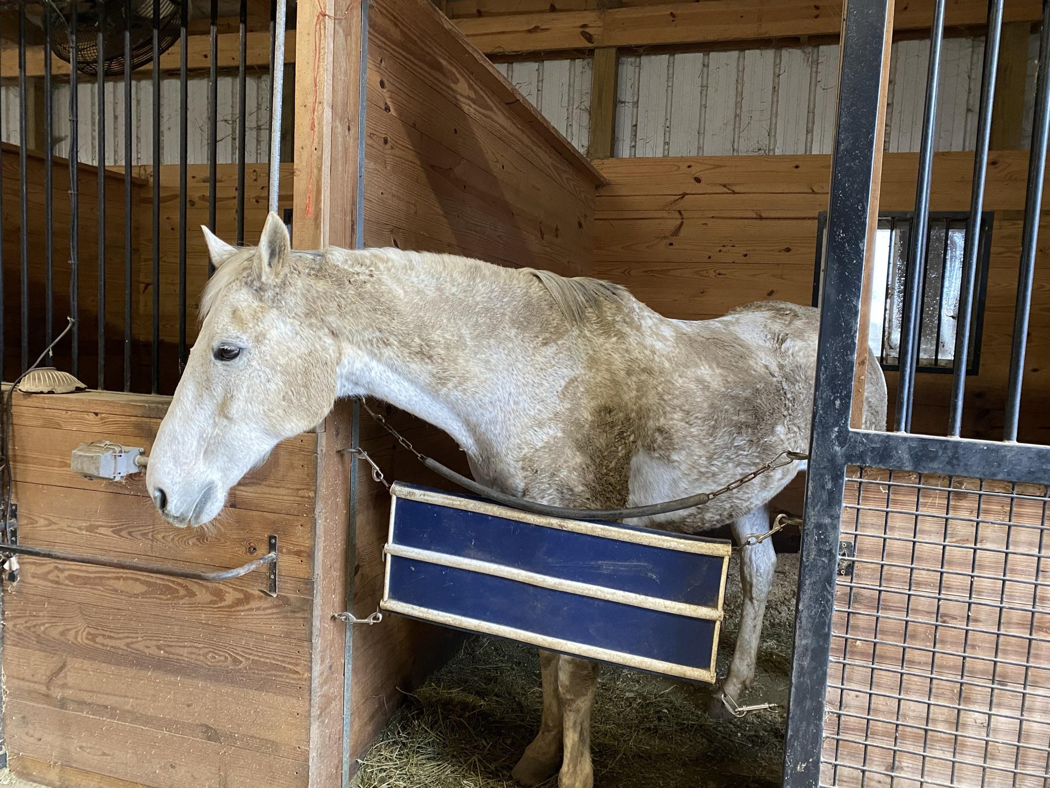 Hot on Horse Nation: Os 5 estágios da tristeza no inverno | Nação de eventos culturais 2