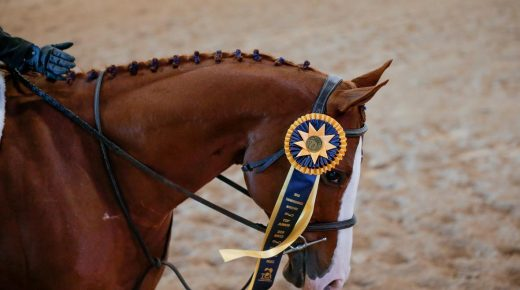 Retired Racehorse Project 2021: Bloggers Wanted