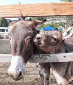 Reader Photo Challenge: 5 Long-Eared Equines