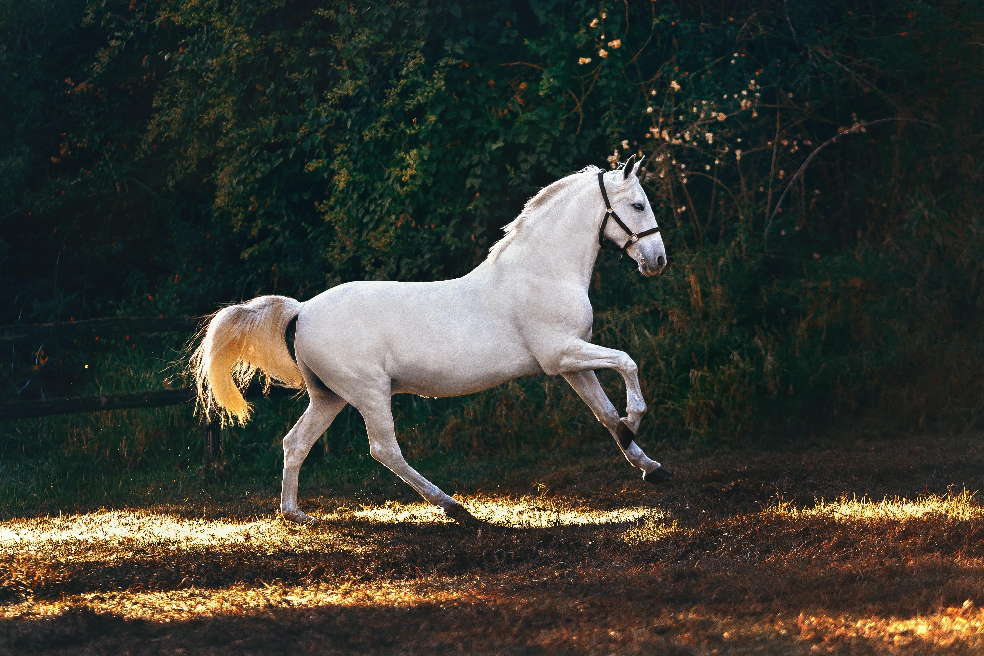CBD e equitação: tudo o que você precisa saber 4
