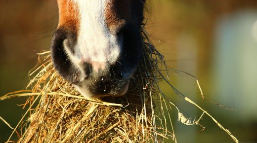 Kentucky Performance Products: 8 Easy Tips To Keep Your Horse's Gut Healthy