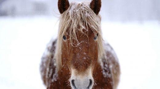 SmartPak Monday Morning Feed: Winter Barn Must Haves