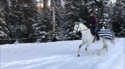 The Land of the Midnight Sun: Horse Ownership in Alaska