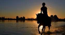 Horseback Riding: 7 Health Benefits