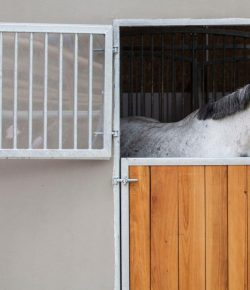 EHV-1 Updates: Latest Reported Cases, Biosecurity Measures at Events