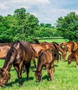 Friends of Ferdinand, Inc. Launches New Broodmare Pilot Program