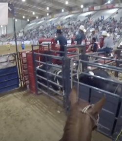 Ecovet Presents Mind Your Melon: What It's Really Like at a Pro Rodeo
