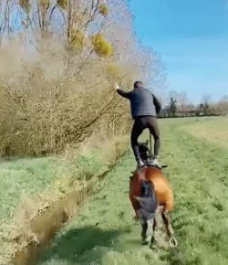 Thursday Video: Trick Galloping