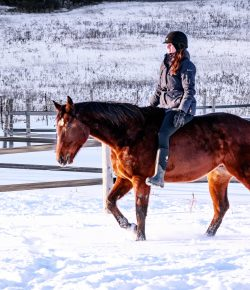 Horsemanship With Lindsey Partridge: Liberty Lies Exposed, and How They Are Holding You Back